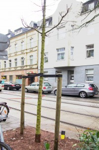 131219_Baum-neu-klein