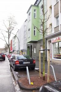 131219_Baum-neu2-klein
